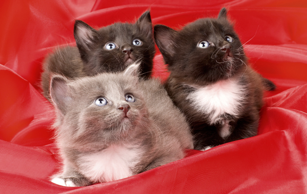 Кошки в нашей жизни