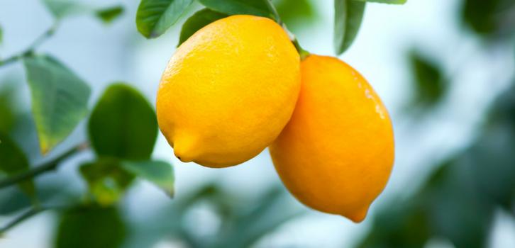 Лимонное или апельсиновое дерево, экзотическая пальма украсят их дом и станут растением-талисманом