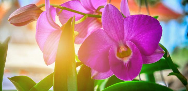Близнецы любят цветы, но не любят за ними ухаживать