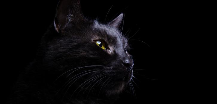 Старая английская поговорка гласит, что <em>«Если дома черный кот, в нем не переведутся любовники»</em>, а значит, в доме будет царить гармония и любовь