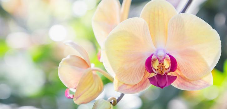 Рыбам идеально подходит орхидея, которая вдохновит их и поможет справиться с апатией, которая время от времени волнами накатывает на представителей знака