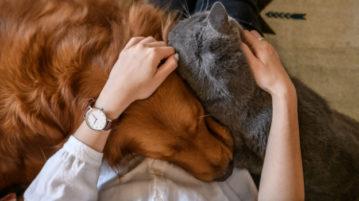 магия и животные