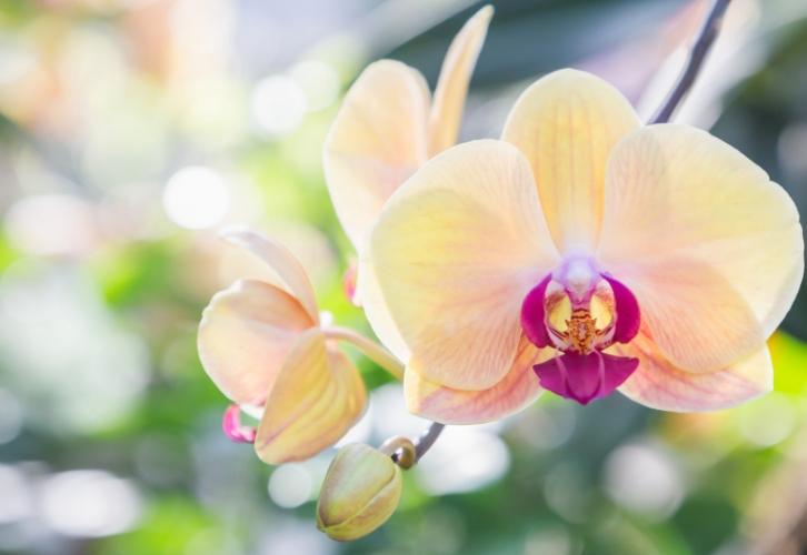 Орхидея наградит своего владельца энергией и силой для любых свершений. А еще растение советуют ставить в гостиной или кабинете людям творческих профессий для вдохновения