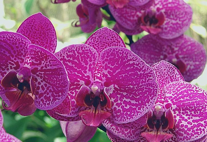 Орхидея и магнолия — лучшие цветы для Львов. Все логично, ведь Львы вряд ли согласятся на полевые цветы, а розы для них — это слишком избито. Этот знак любит все роскошное, красивое и подчеркивающее статус, и такие цветы прекрасно справятся с этими задачами. Цветущими магнолиями можно наслаждаться весной в парках, а вот орхидею растить у себя дома.