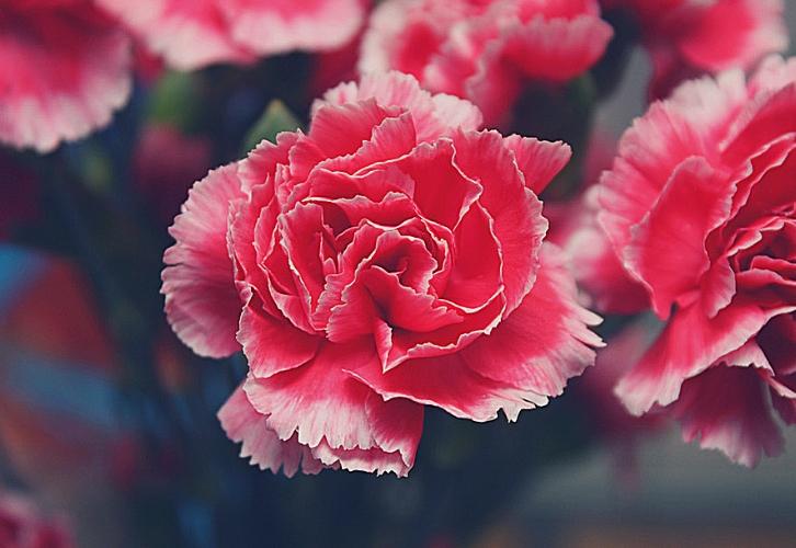 Уж кто, а Скорпионы никогда не побоятся показаться неоригинальными. Их цветы — розы и гвоздики, такие же эмоциональные и яркие. Этот знак непостоянный и противоречивый, для него более значимы чувства, чем доводы разума. Скорпионы, гедонисты по натуре, не смогут устоять перед роскошным букетом роз, а гвоздики придутся по душе тем, кто не желает быть, как все.