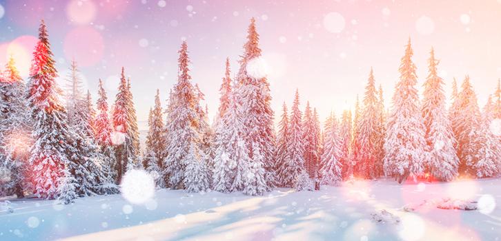 прогноз бацзы на декабрь