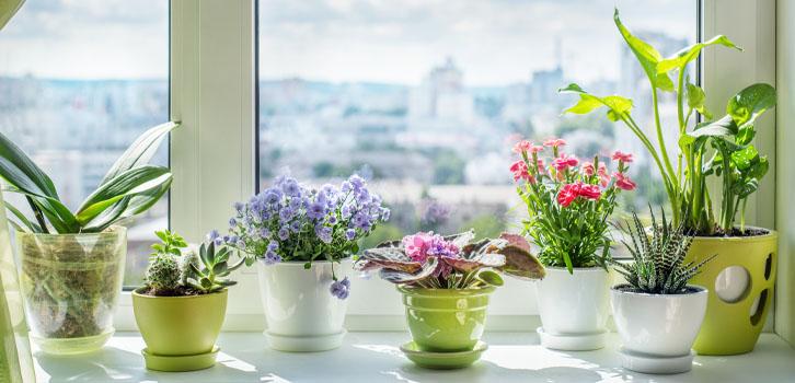 Почему вянут ипогибают цветы вквартире?