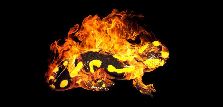 Саламандра— что символизирует талисман?