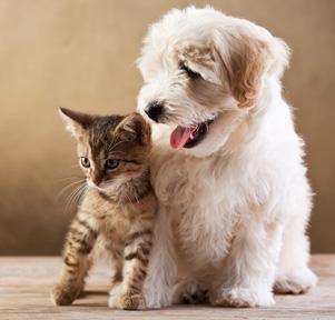 Гороскоп для кошек и собак