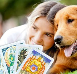 Расклад Таро «Ваше домашнее животное»