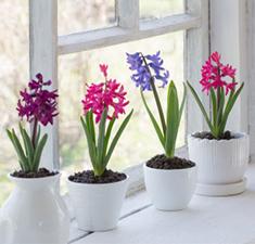 Защита вашего дома и офиса «Магия цветов»