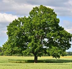 Авторская практика отЛианы Даль «Защита родового дерева»